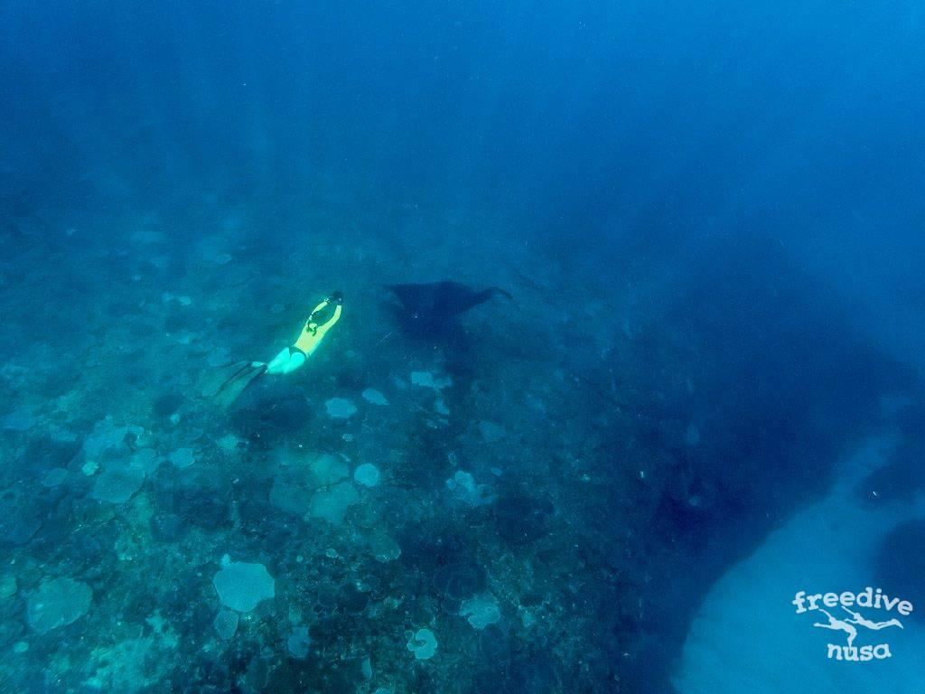 Freedive Nusa