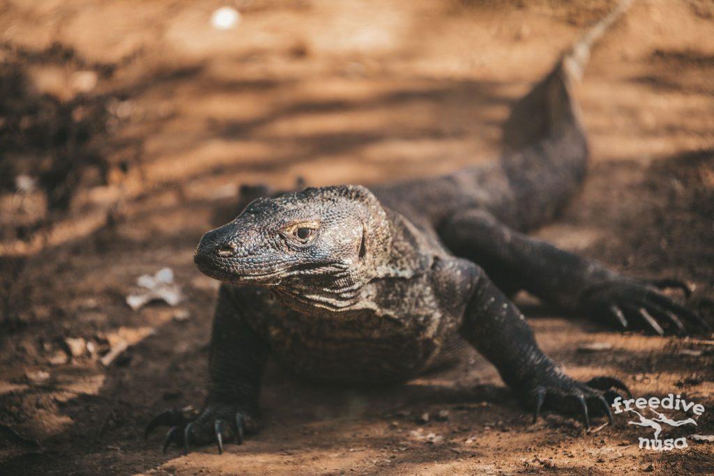 Freedive Safari to Komodo National Park