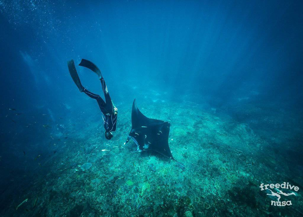Snorkeling with Manta Rays on Nusa Penida