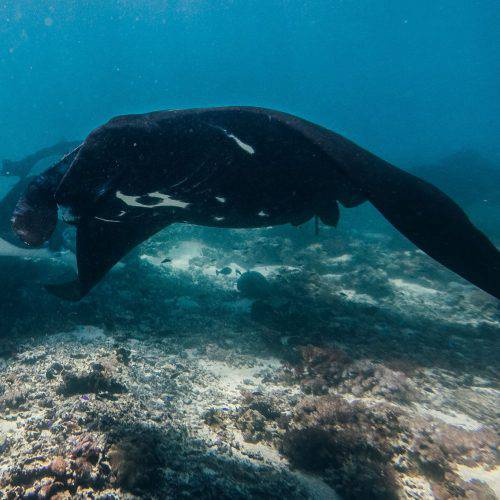 Freedive Safari to Komodo