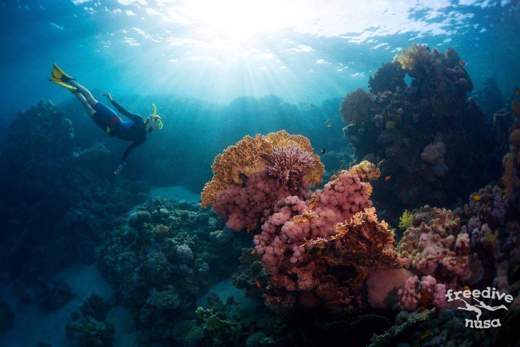 Freediving on Menjangan island