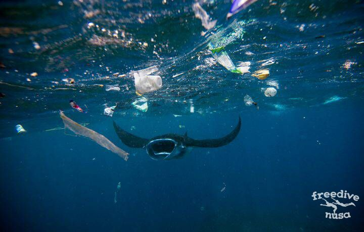 Как каждый из нас может сделать океан чище