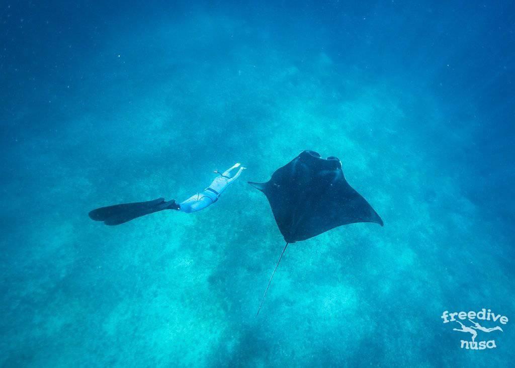 manta snorkeling bali