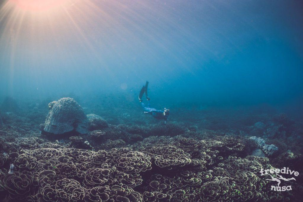 Freedive Safari to Komodo National Park