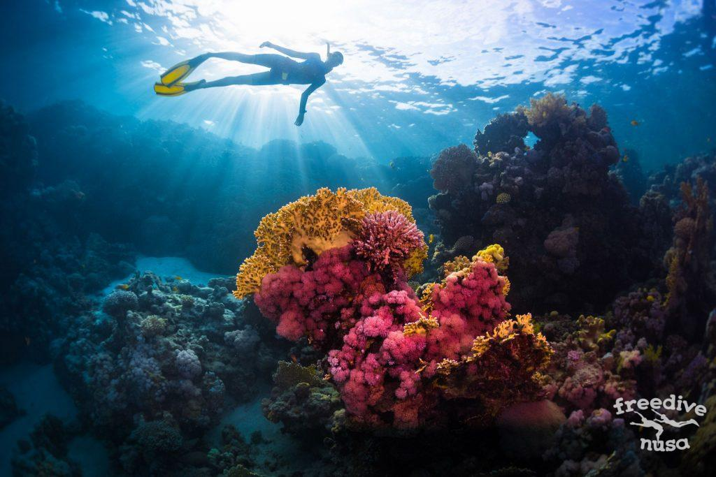 Try Freediving with Freedive Nusa