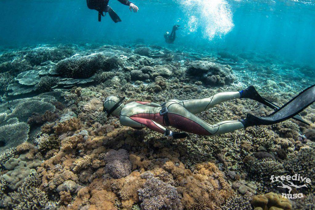 Best dive sites on Nusa Penida