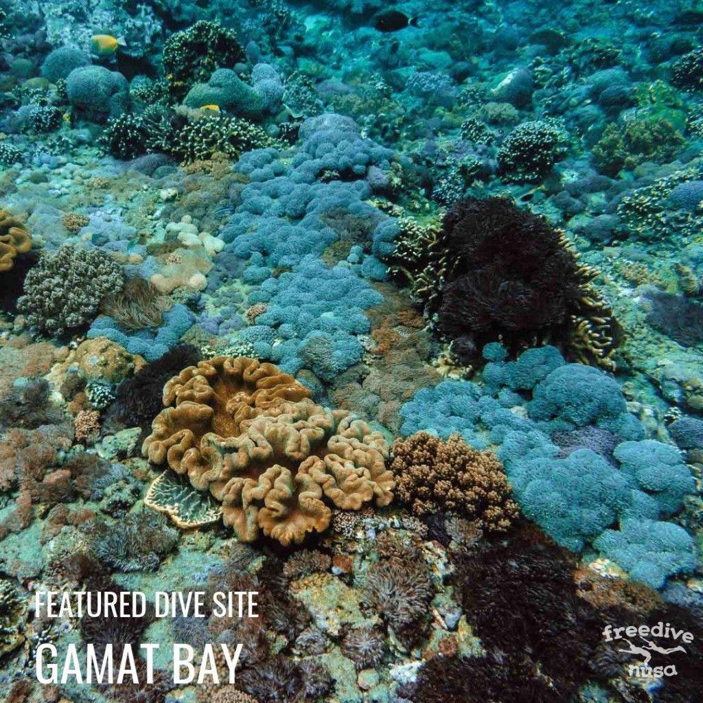 Gamat Bay