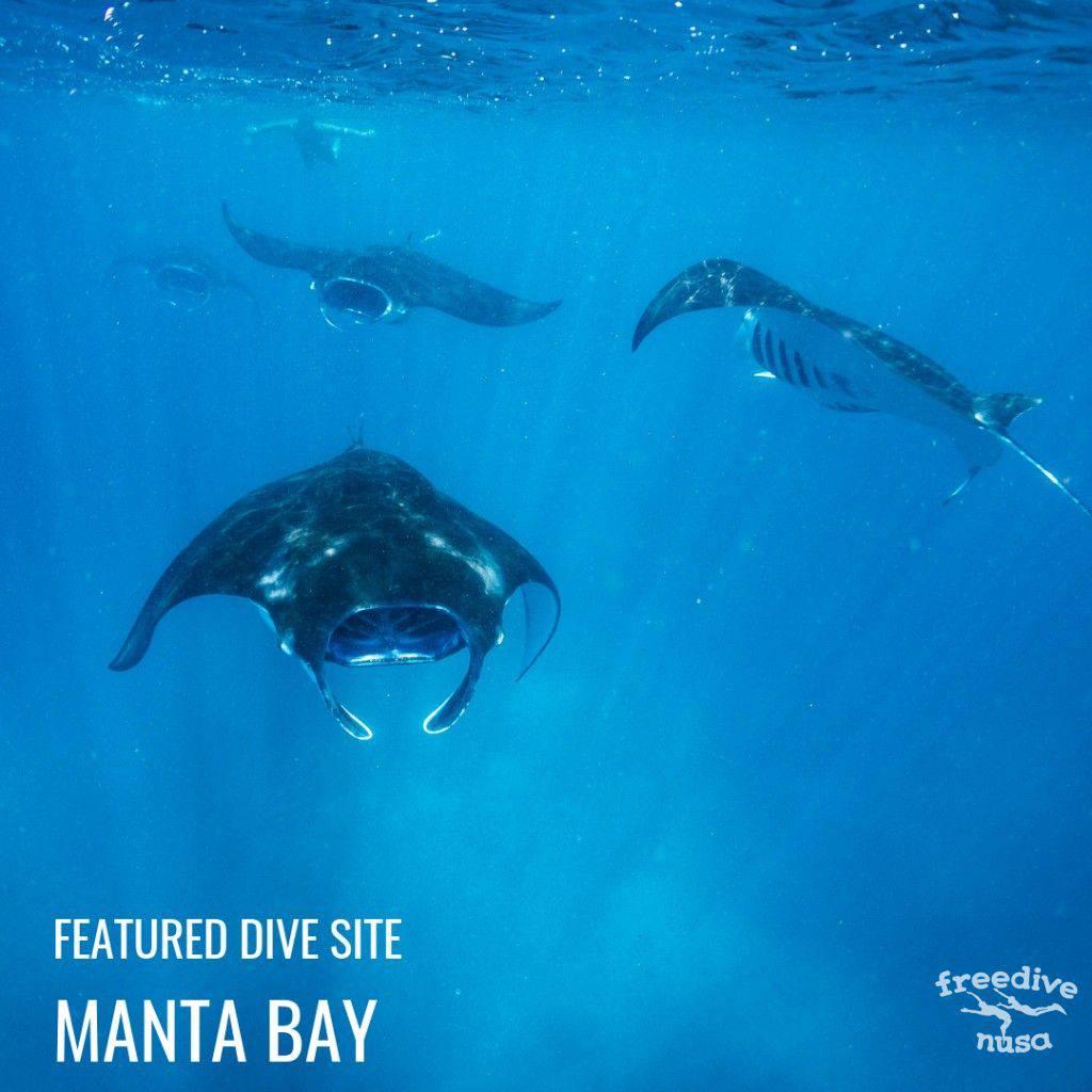 Manta Bay