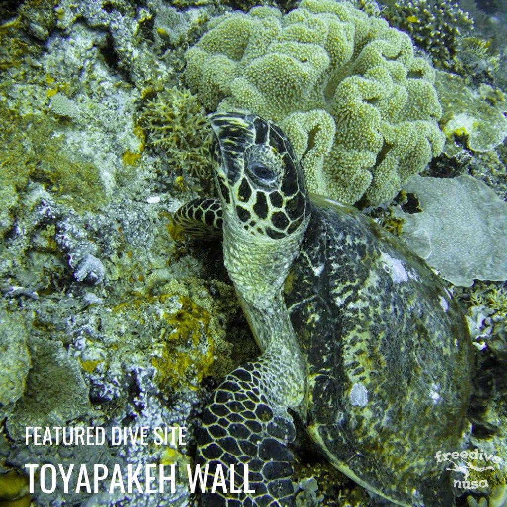 Toyapakeh Wall