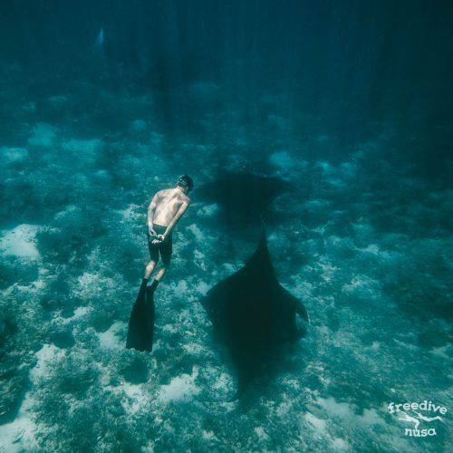 Freedive Trip to Komodo